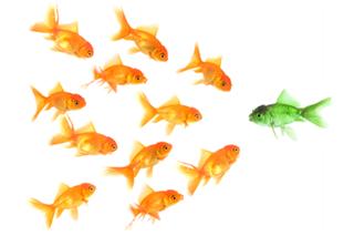 Qué evaluar al contratar un bloguero / tuitero / celebridad para tu marca en web