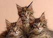 los-3-gatos-que-leen-dalealaweb_